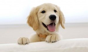 Cute-Puppies-29-HD-Images-Wallpapers