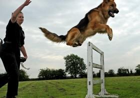 Puppy Training in Dubai
