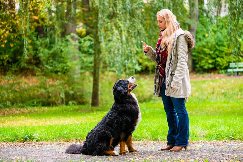 Train your Dog With Trainer.ae