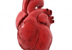 5 Things You Never Knew About Your Heart