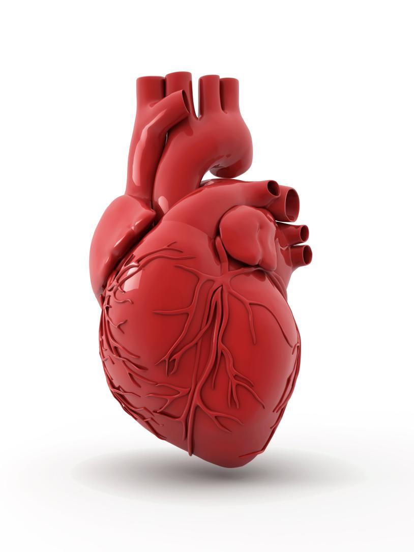 Heart Is An International Peer Reviewed Journal: 5 Things You Never Knew About Your Heart