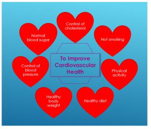 Cardiovascular Health 1