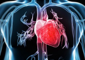 Cardiovascular Disease & Your Heart's Health- What You Need to Know