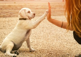 Get Trained your Dog With Trainer.ae