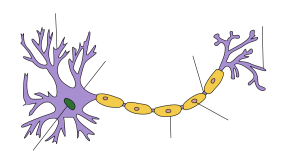 dendrites of brain